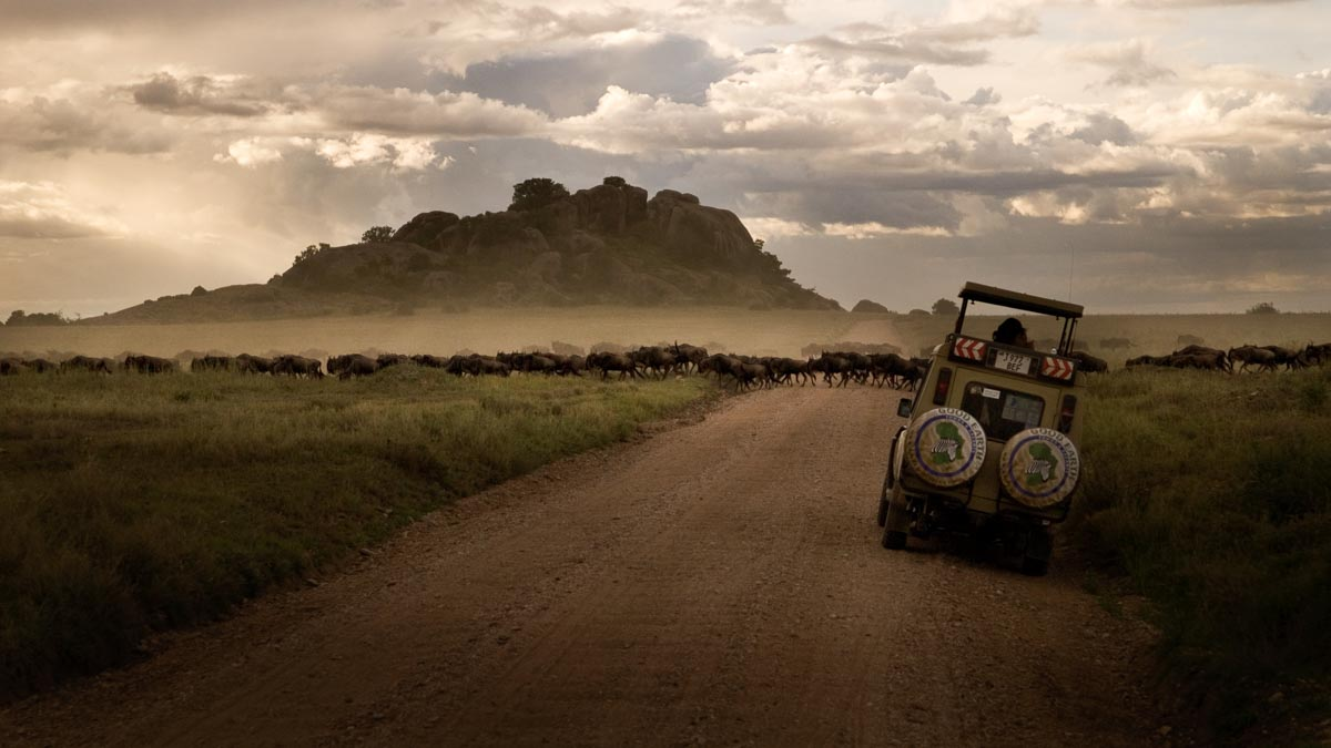 Why you should visit Serengeti